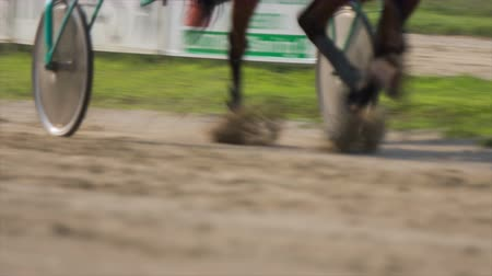 sulky : Harness racer speeding with galloping horse . Close up on sulky tires driving on hippodrome track with brown horse in trot. Stock Footage