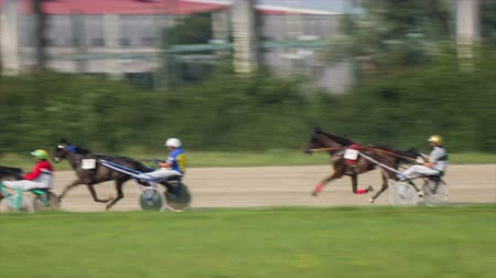 sulky : Harness racer overtaking a competitor . Tracking three harness racers competing on hippodrome with professional sulkies and fast horses. Stock Footage