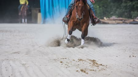 Riding fast on horse and making a sliding stop. Western riding inside a manege making a full stop braking with quarter brown horse. Headless shot of competitors.