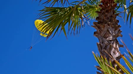 Paratrooper flying from behind a palm tree. View of single yellow paratrooper being pulled at sea, flying behind a palm tree under blue sky.