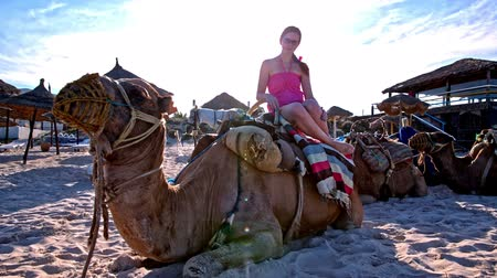 Girl sit on camel at sunset. Camel on sand beach lying on ground with straw umbrellas around. Sun shining in background. Stock Footage