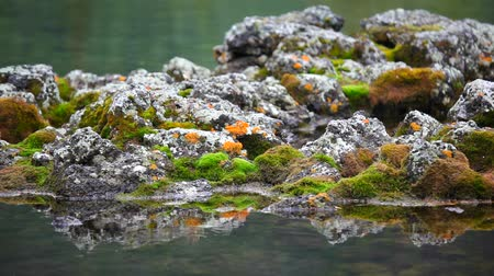 hardened lava : The stones in the water and moss