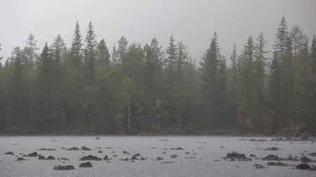 hardened lava : rain on the lake of the woods Stock Footage
