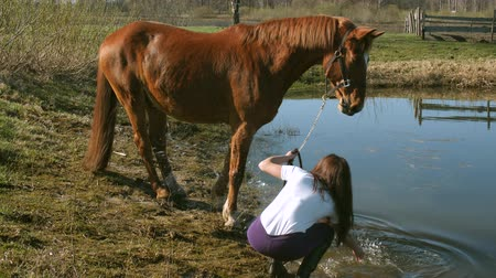 hay fields : Young beautiful girl trying to make a horse swim 4K