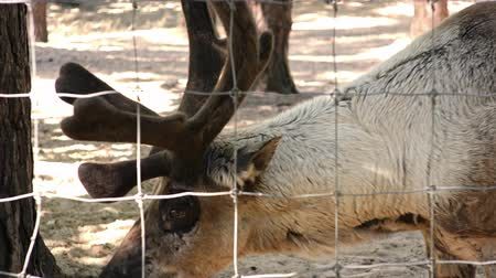 paroh : Deer head in ZOO Deer head in ZOO