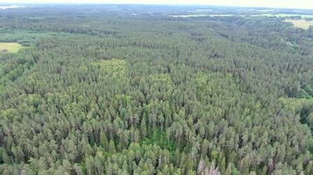 Латвия : Flying over green summer forest. Latvia
