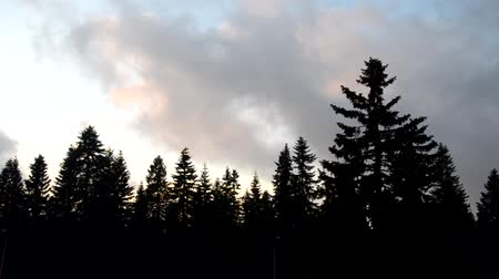 Silhouettes of coniferous trees and clouds floating above. Footage is sped up 10 times.