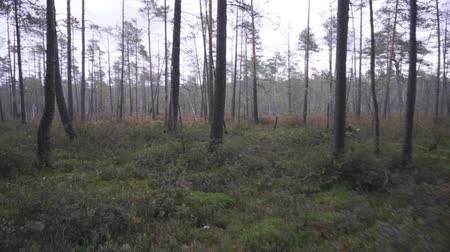 morass : Forest Marshland In the Summer, shot without the stabilizer.