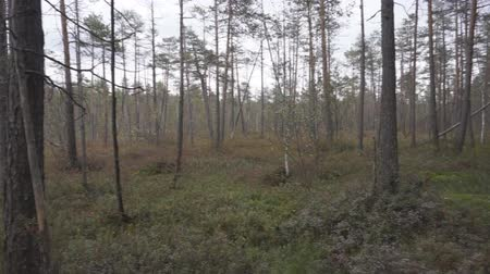 slough : The amount of time a magical spring in the forest swamp. Camera movement from left to right without stabilizer.