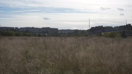 alce : dry grass in the background of the city with passing cars
