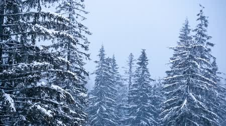 snowy background : Beautiful winter landscape with snow covered trees. Winter mountains. Stock Footage