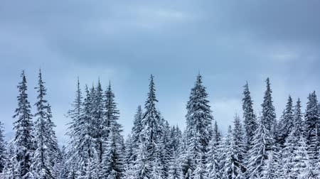 szron : Beautiful winter landscape with snow covered trees. Winter mountains. Wideo