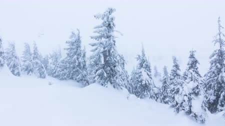 geada : Beautiful winter landscape with snow covered trees. Winter mountains. Stock Footage