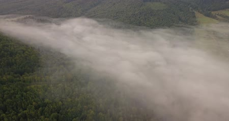 covering : Aerial view to Carpathian forest, shot in Ukraine Stock Footage