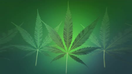 hippie : Marijuana Leaf Loop Background, 3D render