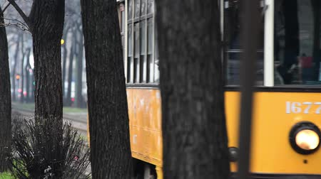 charakteristický : Tram characteristic of MIlan comes at a track lined by trees