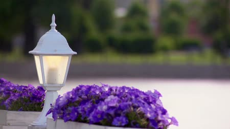 zseblámpa : White flashlight and two flowerbed violets in summer day.