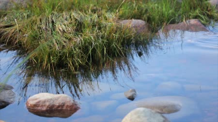 serene : Shore with big stones and green grass. Calm water surface. Summer. Close up