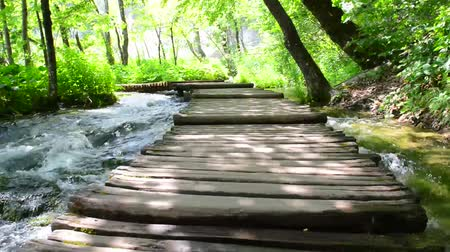 wooden path : Wooden Hiking Path