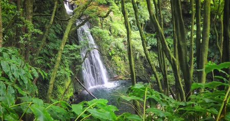terra : Salto do Prego waterfall lost in the rainforest, Sao Miguel Island, Azores, Portugal