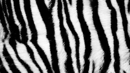 kürk : Black and white animal fur