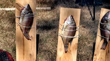 kamp ateşi : Fish on a board being cooked Stok Video