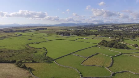 galler : This is an aerial shot of fields divided by stonewalls in the Talybont area of North Wales. It shows green fields on a sunny day, distant mountains and is looking out towards Harlech. Stok Video
