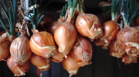 užitečný : A lot of onions hanging in the garden