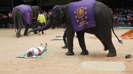 цирк : THAILAND, PATTAYA, NONGNOOCH GARDEN, August 6, 2014: Young woman at the show of elephants in Thailand
