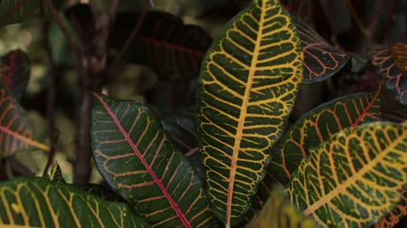 nemli : Tropical leafs jungle background. Closeup,