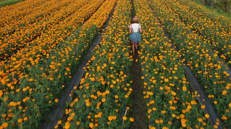 marigolds : 4K aerial flying video of woman on a marigold field. Beautiful travel concept. Bali island.