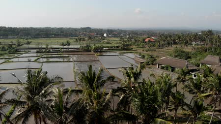 mianmar : 4K aerial flying drone video of rice field full of water. Bali island.