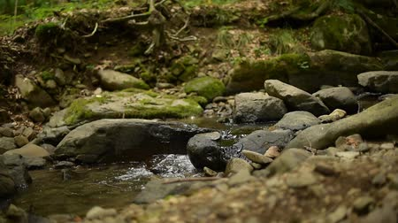 ekosistem : A small stream in a summer forest. Stok Video