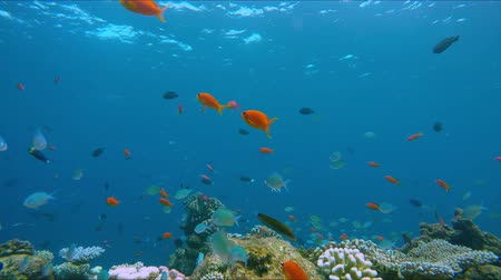 que vale a pena : Lively coral reef edge with a lot of colorful fish