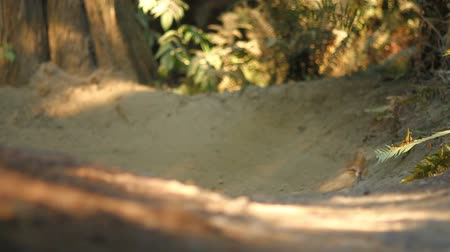 outdoor : v49. A sequence of 3 clips of a mountain biker doing a jump then going through a berm at a public bike park near Seattle.