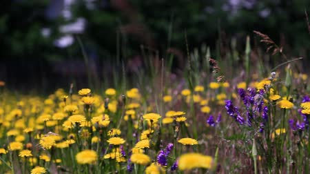 фокус : v1. Slider shot of wild flowers.