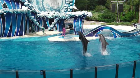 azul : Orlando, Florida, United States - April 22, 2012: two dolphins performing jumps in Azul Show at Seaworld. Seaworld is an animal theme park, oceanarium and to a marine park. Stock Footage