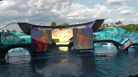 trained : Orlando, Florida, United States - April 22, 2012: the famous orca does a vertical jumping at Seaworld show.