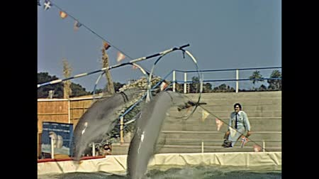 circusdieren : MAJORCA, SPAIN - circa 1970: Historical restored footage of old famous dolphin show at Safari Zoo park in Majorca. Animal trainer makes dolphin play twisting and jumping in the rings.