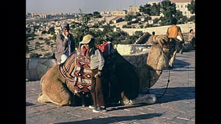 tallit : JERUSALEM, ISRAEL - CIRCA 1981: Senion camel driver with child son in typical old fashion clothing and talled shawl. City of Jerusalem. Historic restored footage on 1980s in Israel. Stock Footage