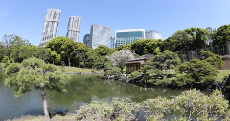 chuo city : Tokyo, Japan -April 20, 2017:Modern buildings of Shiodome, Shimbashi district on background, reflection of Hamarikyu Gardens. Hama Rikyu is a large, attractive landscape garden in Tokyo, Chuo district Stock Footage