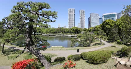 chuo city : Tokyo, Japan -April 20, 2017: Beautiful Hamarikyu Gardens in spring with blooms, Chuo district. The traditionally styled garden stands in contrast to skyscrapers of Shiodome discrict.