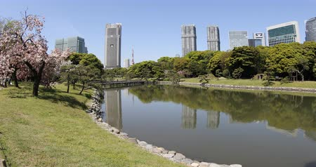 chuo city : Tokyo, Japan -April 20, 2017:Hamarikyu Gardens is a large landscape garden in Tokyo, Chuo district, Sumida River, Japan. Oriental japanese garden. The Hama Rikyu is in contrast to the skyscrapers. Stock Footage