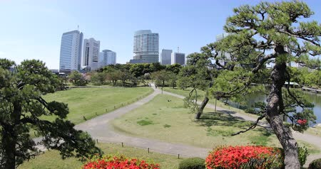 chuo city : Hamarikyu Gardens, Tokyo, Sumida River, Chuo district, Japan. Oriental japanese garden during Hanami. The Hama Rikyu is in contrast to the skyscrapers of the adjacent Shiodome district. Stock Footage