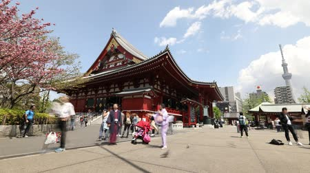 senso ji : Tokyo, Japan - April 19, 2017: Tokyo icons: Kannon Temple in Senso-ji the oldest shrine in Tokyo, Tokyo Skytree symbol of city, cherry blossom, national flower of Japan and women in japanese kimonos. Stock Footage