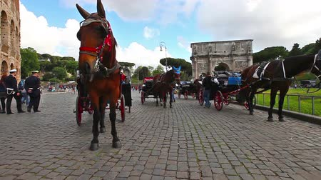 amphitheatrum : Rome, Italy - May 12, 2016: Horses at Colosseo or Flavian Amphitheatre, the biggest amphitheater in the world located in Rome city. Stock Footage