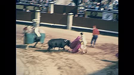bullfight : Madrid, Spain - circa 1978: wounded bull struggling for life jabbed with a lance by the picador, the spearman horseman of the Spanish bullfight in traditional dress. Restored 70s archival footage.