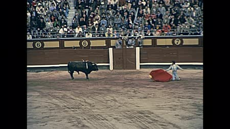 bullfight : Madrid, Spain - circa 1978: bullfight of a big bull with red cloth in the Las Ventas arena of Madrid. most famous bullring in the world. Restored historical 70s archival footage Stock Footage