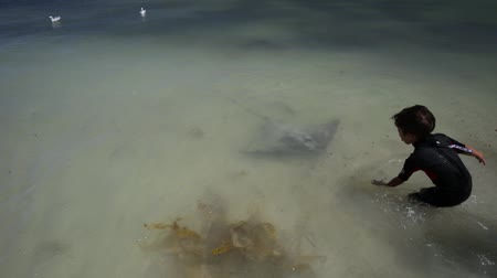 маргарита : Hamelin Bay, Australia - Jan 1, 2018: child feeding Eagle Rays on the shore, one of best places in Australia to spot wild sting rays.