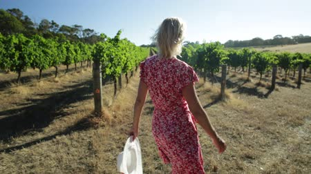 маргарита : Australian vineyard. Caucasian farmer walks carefree among the rows of white grapes. Blonde female with red dress and hat getting ready for harvest. Sunset light. Margaret River, Western Australia.